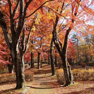 秋の夕焼けの渚公園